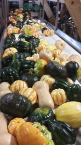 pumpkins and gourds farmers market