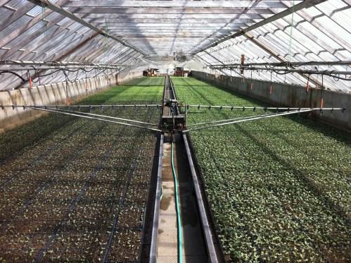 farm to table strawberries