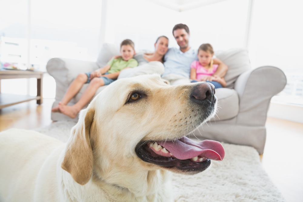 All Aboard: Why Getting the Whole Family Involved… | How I Met My Dog