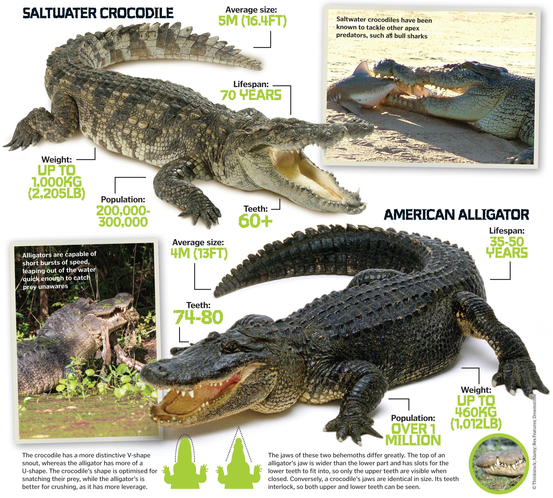 Albino Crocodile Damnthatsinteresting
