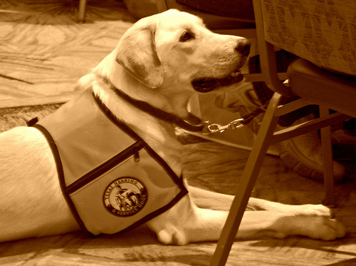 How Much Does A Service Dog Cost