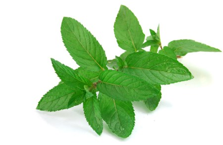 mint leaves for dieting