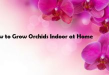 How to Grow Orchids Indoor at Home