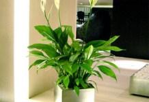 List of Home Gardening Plants & Flowers