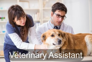 how to become a veterinarian assistant