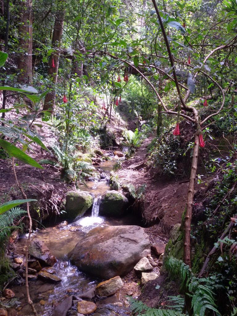 Bogota nature river and trees