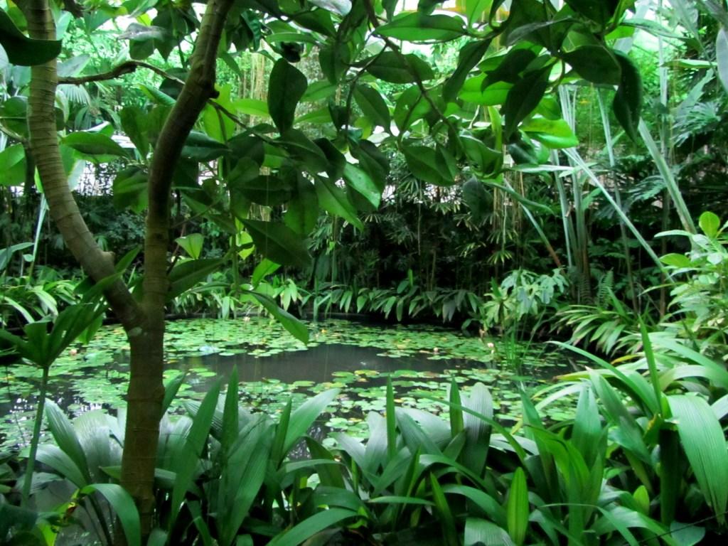 Bogota botanical garden tropical greenhouse