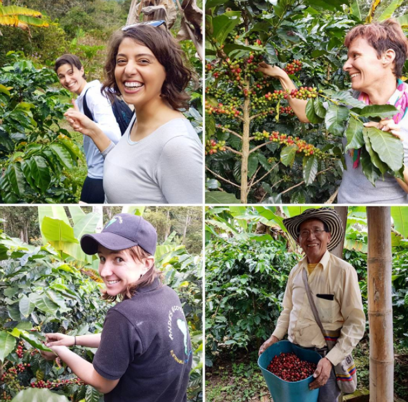 Coffee Farm tour bogota