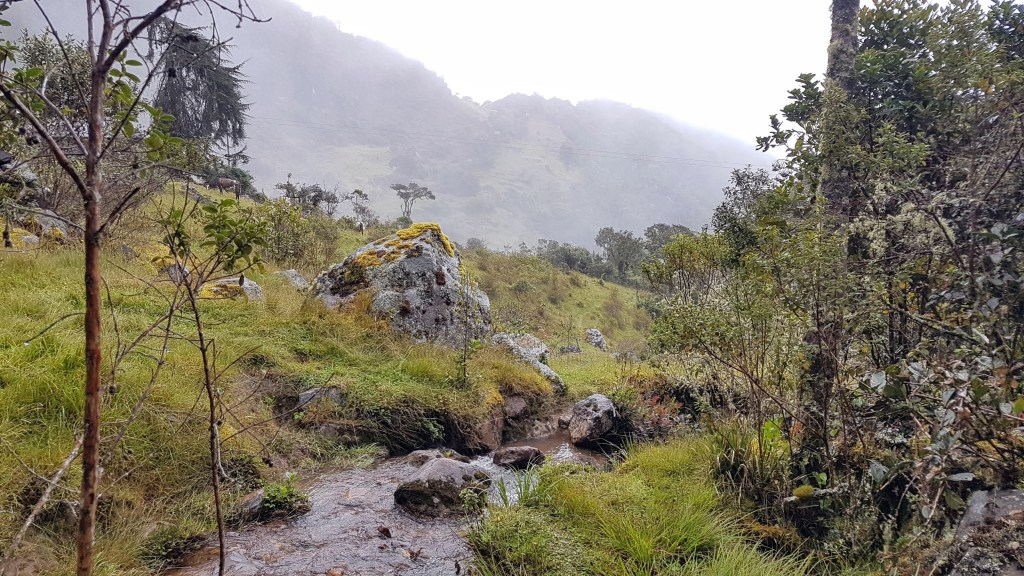 Views of the cloud forest in Choachi, near Bogota, Colombia