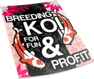 breeding koi, raising koi fish, how to breed koi