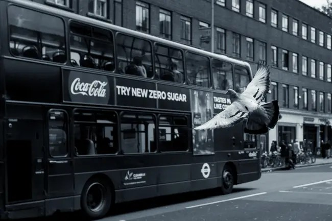 photo showing pigeon in front of a bus demonstrating depth of field