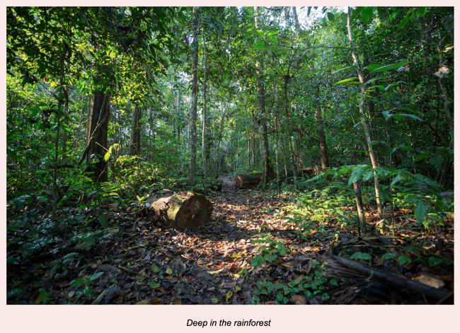 Rainforest Caption in table in Google Docs