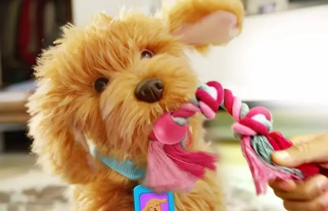 Moji playing with a rope toy