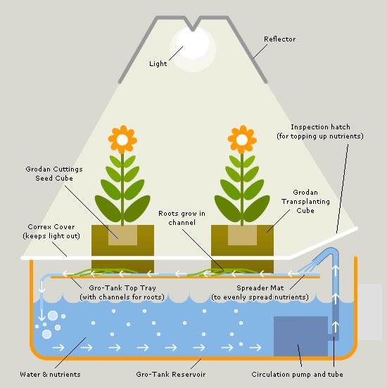 Led Grow Lights Seedlings