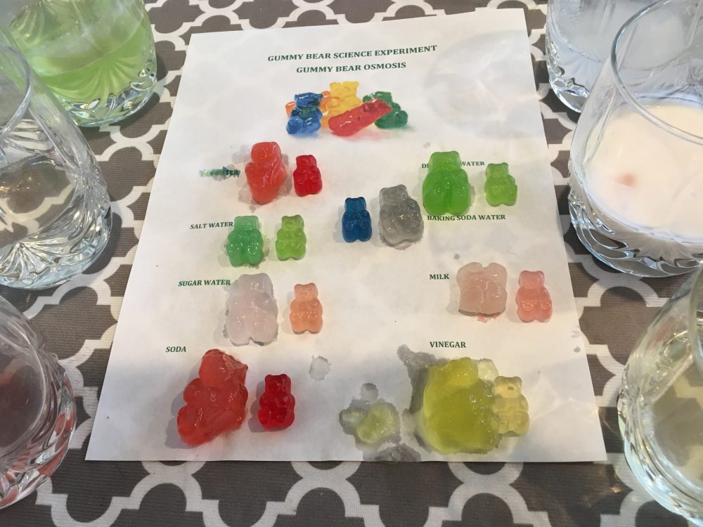 Gummy Bear Osmosis Science Experiment - How to Homeschool