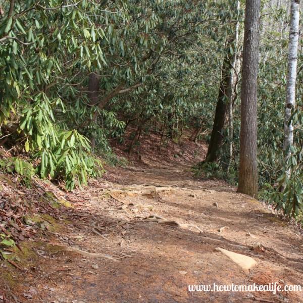 TN Trail