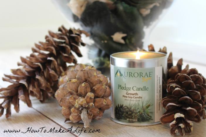 Aurorae Soy Pledge / Growth Soy Candle