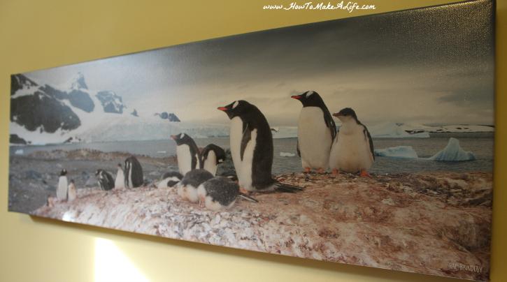 Hal Brimley Penguins