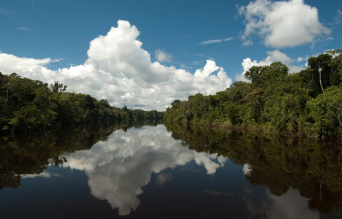 Lima to Iquitos by Boat - River in Jungle