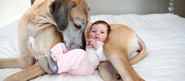Babies and Pets Dogs