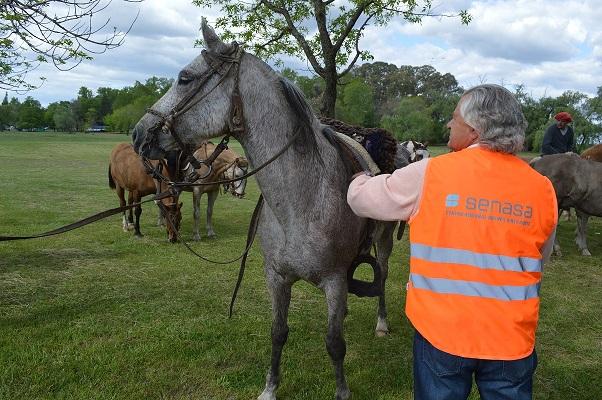 El certificado de anemia infecciosa equina es obligatorio para peregrinar a caballo hacia Luján