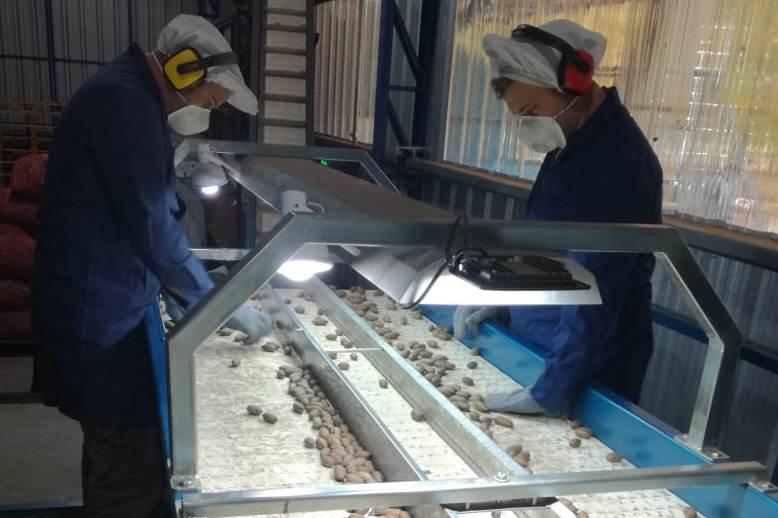 Suipacha: Habilitan nuevo empaque de nuez pecán con destino exportación