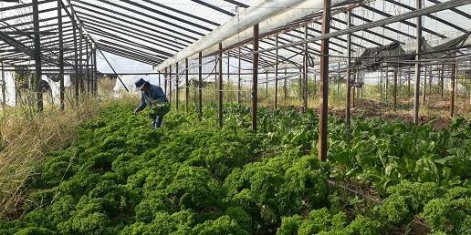 Actualización automática para agricultores familiares de frutas y hortalizas