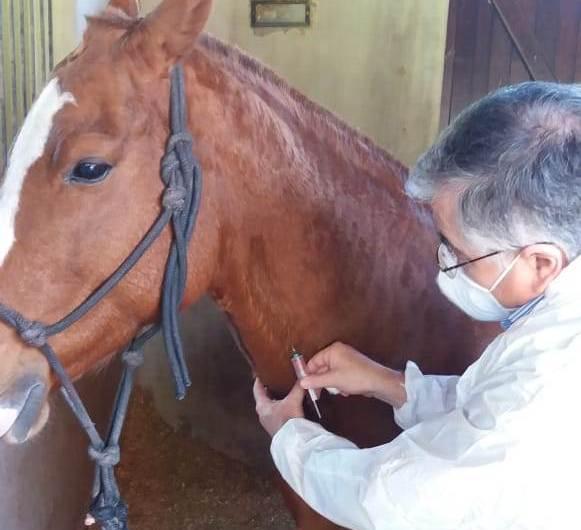 Continúan los controles a equinos de la región centro y norte bonaerense