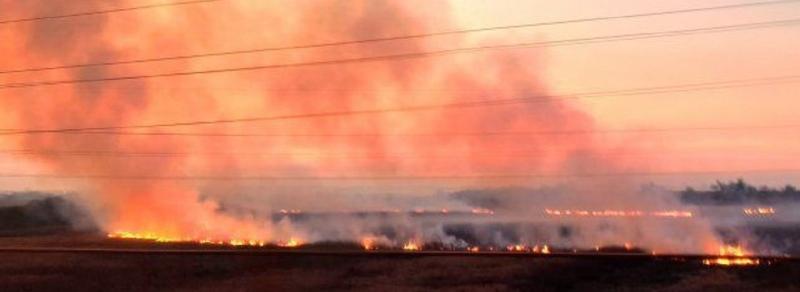 Los Defensores del Pueblo fueron a la Corte por los incendios en el Delta del Paraná