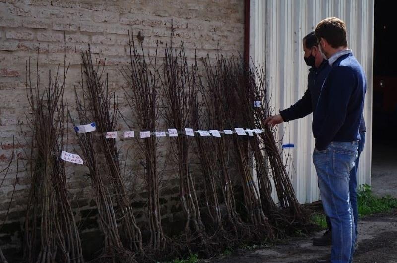 Entregan plantas de duraznos y ciruelas a productores locales
