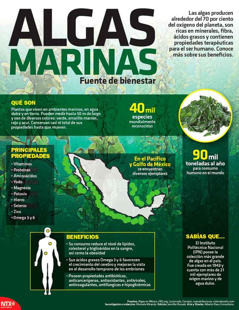 Algas Marinas