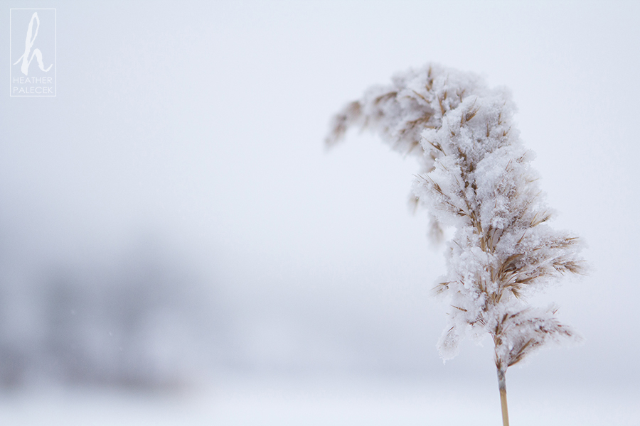 The Most Beautiful Snowy Plant