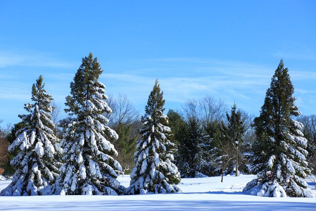 Winter-Storm-Jonas-2016-Snow