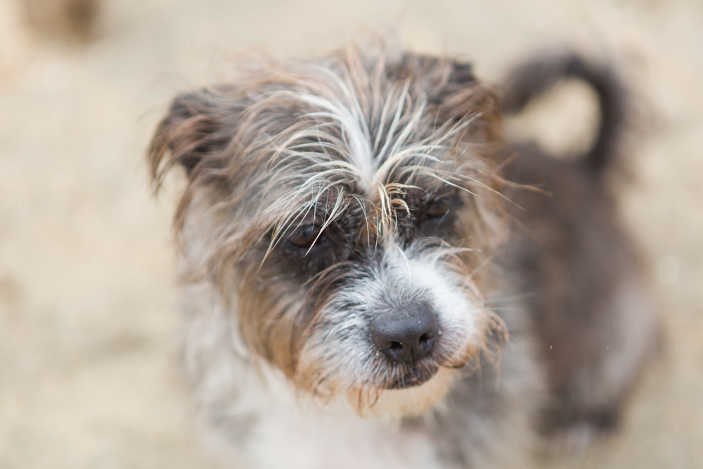 close up of dog on the beach