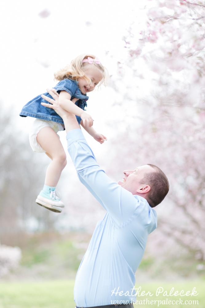 dad holds up daughter under cherry blossom tree