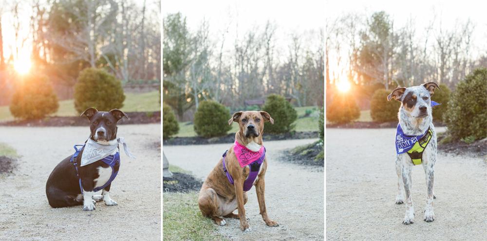 collage of three dog portraits