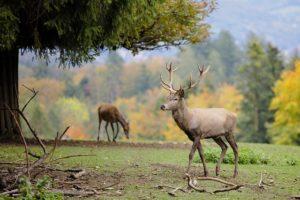 antlers luminant mammals