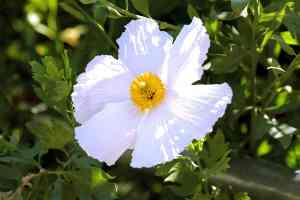 White Flower & Yellow Center Photo Print