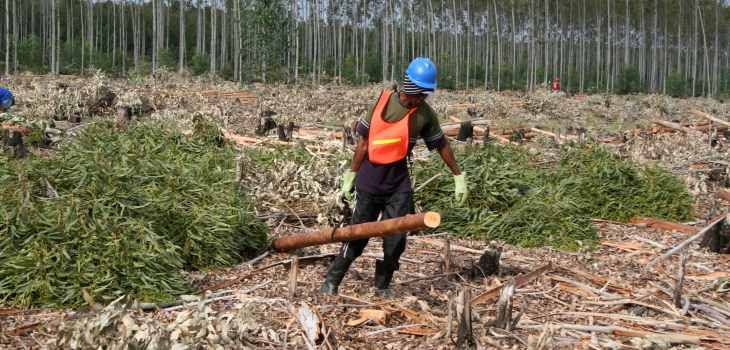 Forestry-Worker