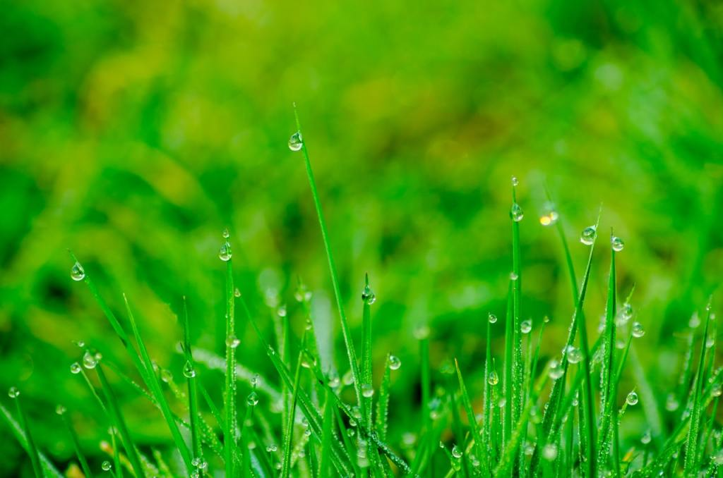 Have an Irrigation System? It May Be Time for an Inspection