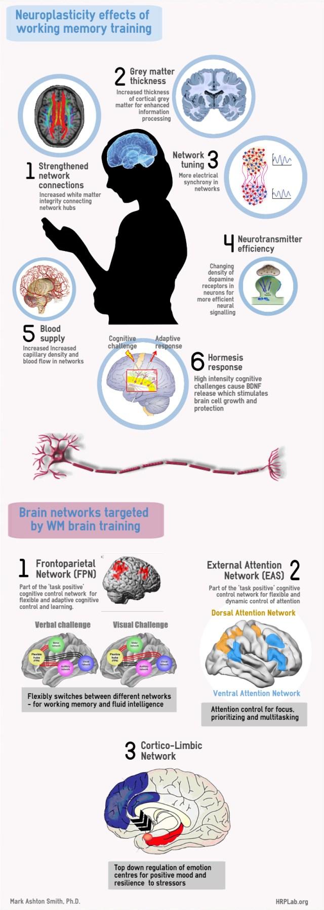 how brain training works