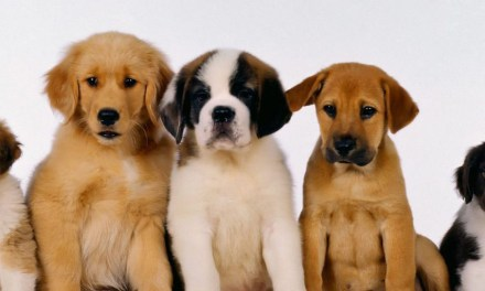 Craft brewery staff given a week's leave to look after new puppies