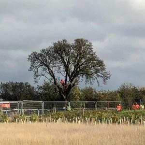 Obituary for the Cubbington Pear Tree