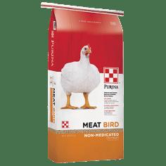 meat bird