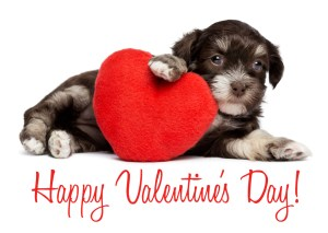 Valentine Pet Photos