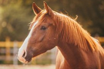 Close up of a healthy brown equine in a pasture