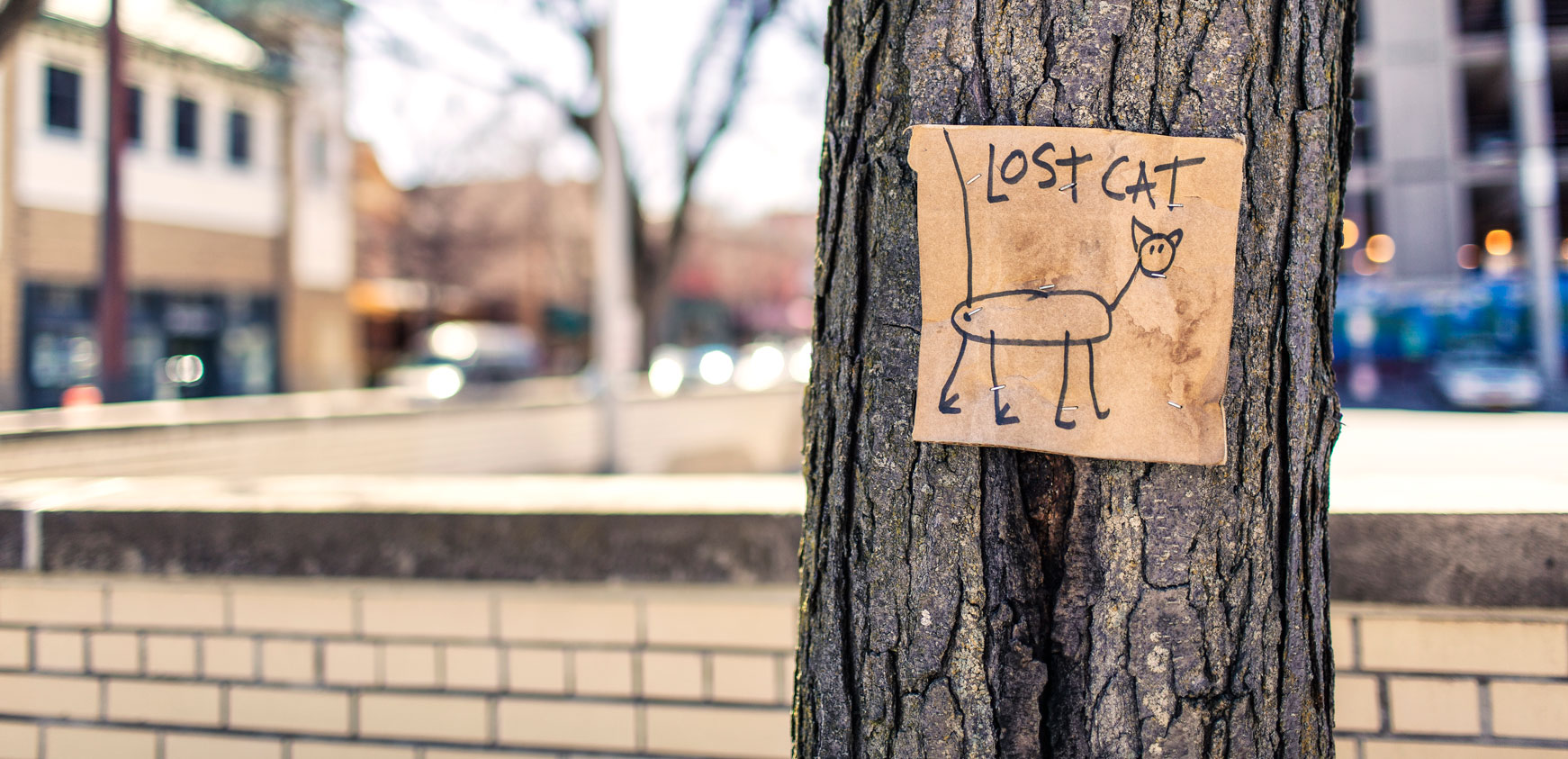 lost cat poster on tree