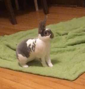 Bunny Needs ReHoming