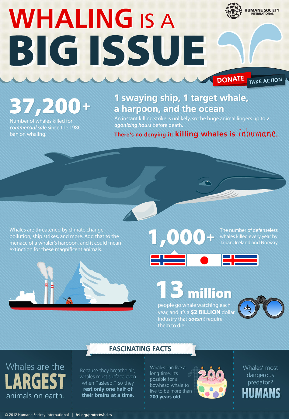 Whaling is a BIG Issue Infographic