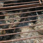 Cats in China's dog meat trade